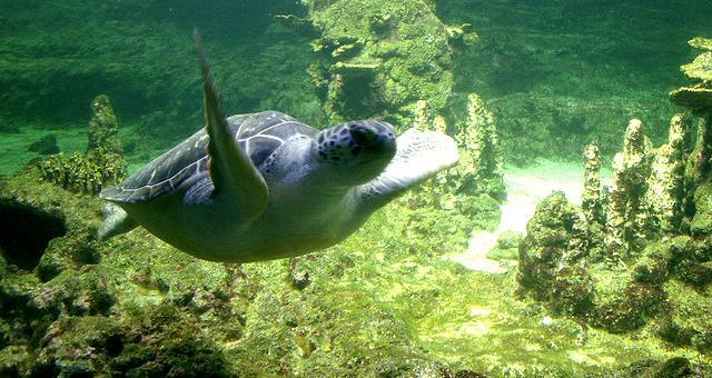 offerta acquario di genova | biglietti gratis | bw hotel moderno verde - Pacchetti Soggiorno Acquario Di Genova